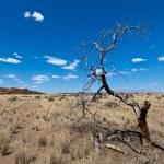 Amazing landscape, Namibia — Stock Photo