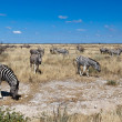 Zebras, Namibia, Africa - Stock Photo