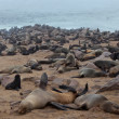 Seals having a rest on the beach, Namibia - Stok fotoğraf