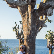 Woman embracing Galapagos cactus tree — Stockfoto