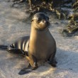Sea Lion — Stockfoto #25263823
