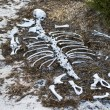 Animal bones, Galapagos islands — Stock Photo