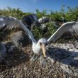 Albatross on Galapagos islands — Stock Photo