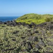 Galapagos landscape — Stock Photo