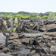 Stock Photo: Galapagos volcanic terrain