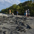 Stock Photo: Many Marine Iguanas