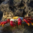 Crab on a beach — Stock Photo