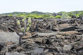 Galapagos volcanic terrain — Stock Photo
