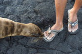Closeup with a sea lion. — Stock Photo