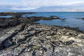 Galapagos leguaner — Stockfoto