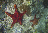 Starfish on the Seabed — Stock Photo