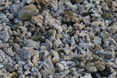Coral pebble background of Galapagos islands — Stock Photo