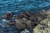 Galapagos crabs — Stock Photo