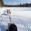 Riding a  sledge with dog team — Stock Photo