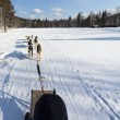Riding a  sledge with dog team - Stock Photo