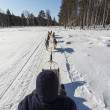 Stock Photo: Riding a sledge with dog team