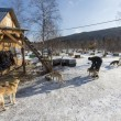 Sled dogs in Russian Siberia — Foto de Stock
