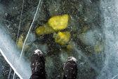 Stil life under ice — Stock Photo