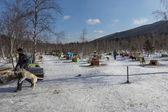 Sled dog in Russian Siberia — Stock Photo
