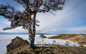 Shaman tree on Baikal lake in Russia — Stock Photo