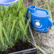 Blue plastic watering can on a ground and young trees for planting — Stock Photo