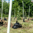 Stock Photo: Newly planted park in Vladimir, Russia
