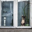 Stock Photo: Window of old abandoned house in Vladimir, Russia