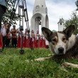 Dog at russian folk festival — Stock Photo