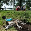 Dog at russian folk festival — Foto de Stock