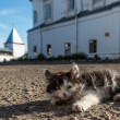 Little kitten in Monastery at Pereslavl town, Russia — Foto de Stock