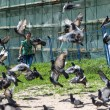 ������, ������: Tourist and pigeons at Trinity Sergius Lavra in Sergiev Posad Russian Federation