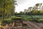 Destroyed park in Pereslavl, Russia — Stock Photo