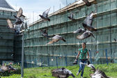 Tourist and pigeons at Trinity Sergius Lavra in Sergiev Posad. Russian Federation — Stock Photo