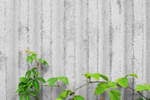 Concrete wall with creeper plants — Stock Photo