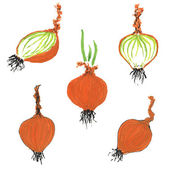 Set of hand drawn onion images — Stock Photo