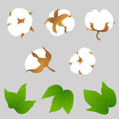 Set of cotton plant elements — Stock Vector
