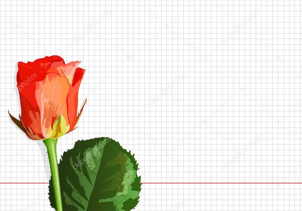 Vector, rose on a notebook sheet, the base for a card for a teacher or a mother — Stock Vector #20504777