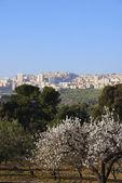 Agrigento, Sicily with trees — Stok fotoğraf