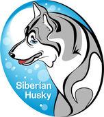 Siberian Husky — Stock Vector