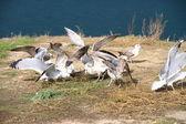 Gulls fly from coast — Stock Photo