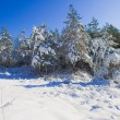 Trees in the snow against the bright blue sky. — Stock Photo #18649363
