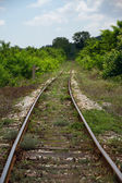 Empty railroad among the trees and grass — Stock Photo
