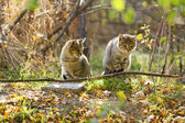Two gray fluffy cats sits near the branches and leaves — Stock Photo