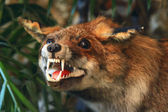 Stuffed red fox in the grass and trees — ストック写真