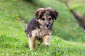 Cute little dog Playing in the grass — Stock Photo