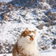 Fluffy cat outside in winter mountains — Stock Photo