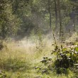 Morning fog in the forest — Stock Photo