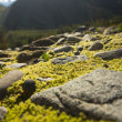 Stones covered with moss and mountains background — Stock Photo