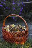 Kosz z grzybów jadalnych — Zdjęcie stockowe
