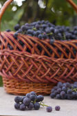 Baskets with nature grapes — Stockfoto